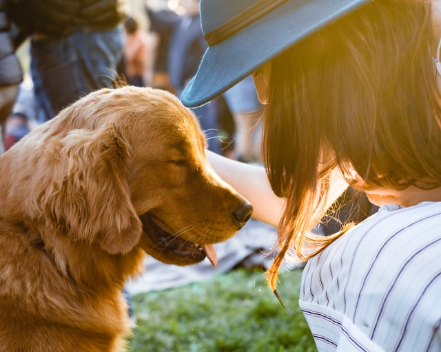 Pet Safety During Home Renovation